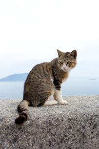 堤防のキジ白猫の写真素材 [FYI02665760]