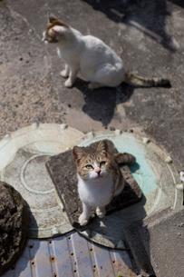 見上げるキジ白猫の写真素材 [FYI02665764]
