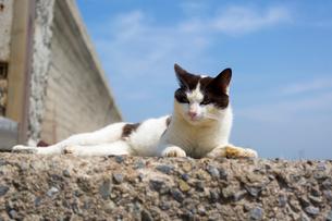 青空と黒白猫の写真素材 [FYI02665785]