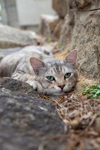 尾道の猫の写真素材 [FYI02665808]