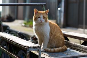 台車の上の茶白猫の写真素材 [FYI02665866]