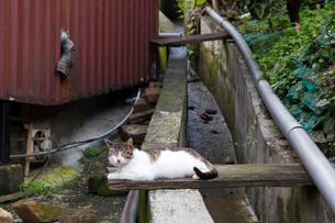 台湾、猫村の用水路の写真素材 [FYI02665879]