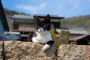 石垣の上に座る黒白猫の写真素材 [FYI02665924]