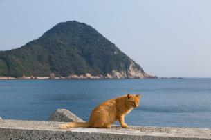堤防の上の猫と、乞月山の写真素材 [FYI02665953]