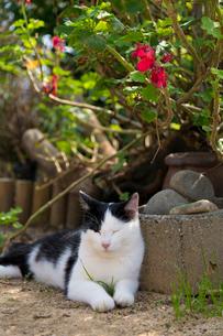 植木のそばで眠る猫の写真素材 [FYI02665971]