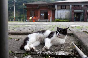 台湾、猫村、願景館前のネコの写真素材 [FYI02665976]
