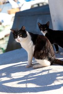 真鍋島の猫の写真素材 [FYI02666070]