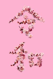 梅の花でつくった令和の文字と梅色の背景の写真素材 [FYI02666075]