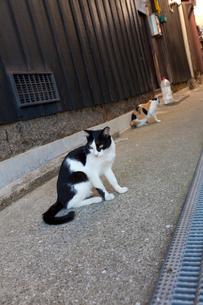 真鍋島の猫の写真素材 [FYI02666154]