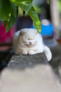 台湾、猫村のフェンス上の写真素材 [FYI02666159]