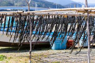 菅島の伝統製法 糸わかめの写真素材 [FYI02666176]