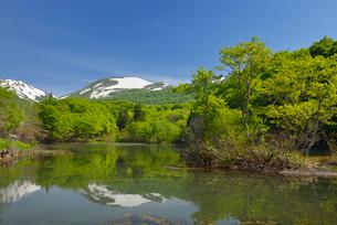 五色沼の新緑と残雪の月山の写真素材 [FYI02666310]