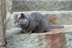尾道の猫の写真素材 [FYI02666929]