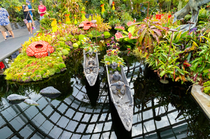 クラウドフォレストの池の写真素材 [FYI02666984]
