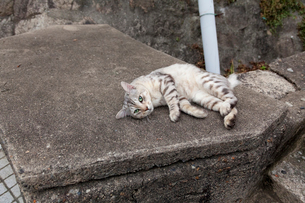 尾道の猫の写真素材 [FYI02667033]