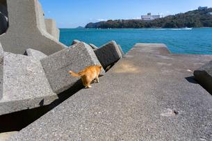 坂手島の消波ブロックの写真素材 [FYI02667035]