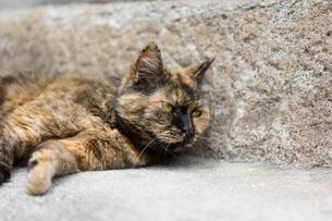サビ猫の写真素材 [FYI02667155]