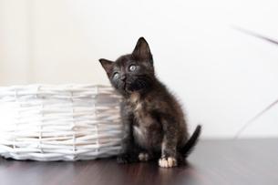 かごと仔猫の写真素材 [FYI02667192]