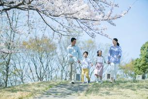 手をつなぎ桜の木の下を歩く幸せな家族の写真素材 [FYI02667438]