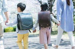 手をつなぎ桜並木を歩く幸せな家族の後ろ姿の写真素材 [FYI02667469]