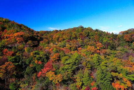 ほしだ園地紅葉の写真素材 [FYI02667476]