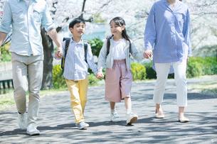 手をつなぎ桜並木を歩く幸せな家族の写真素材 [FYI02667578]
