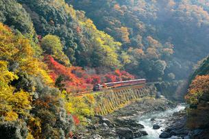 京都 紅葉した保津峡と嵯峨野トロッコ列車の写真素材 [FYI02667630]