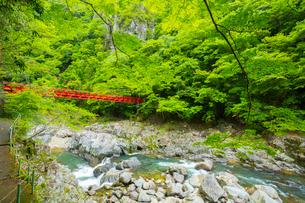 新緑の長門峡と紅葉橋の写真素材 [FYI02667984]