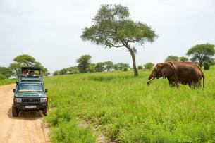 タンザニア サファリの写真素材 [FYI02668336]