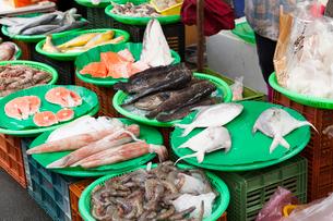 台北 市場の海産物の写真素材 [FYI02668396]