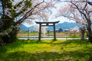 山県有朋誕生地にて厳島神社の鳥居の写真素材 [FYI02668528]