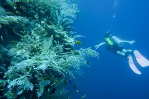セブ島バリカサグ,ダイビングの写真素材 [FYI02668547]