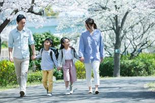 手をつなぎ桜の木の下を歩く幸せな家族の写真素材 [FYI02668638]