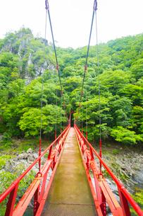 長門峡の紅葉橋と新緑の写真素材 [FYI02668681]