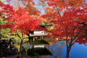 西之丸庭園 紅葉渓庭園の紅葉の写真素材 [FYI02668719]