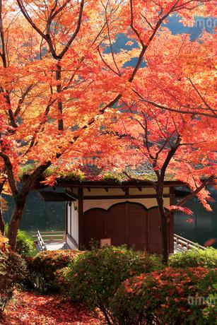 西之丸庭園 紅葉渓庭園の紅葉の写真素材 [FYI02668862]