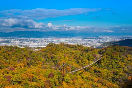 ほしだ園地紅葉と吊橋の写真素材 [FYI02669073]