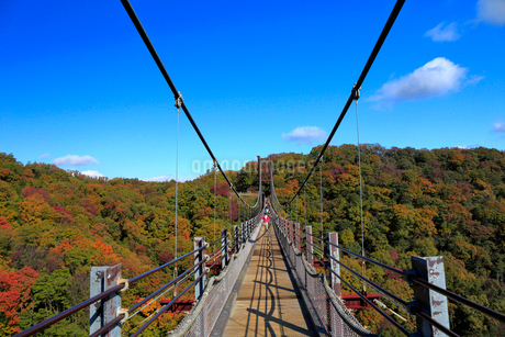 ほしだ園地紅葉と吊橋の写真素材 [FYI02669076]