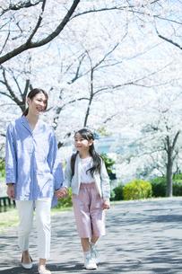 桜の木の下を歩く笑顔の親子の写真素材 [FYI02669079]