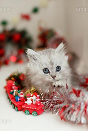 クリスマスと子ねこの写真素材 [FYI02669081]