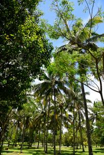 ジャワ島の風景の写真素材 [FYI02669124]
