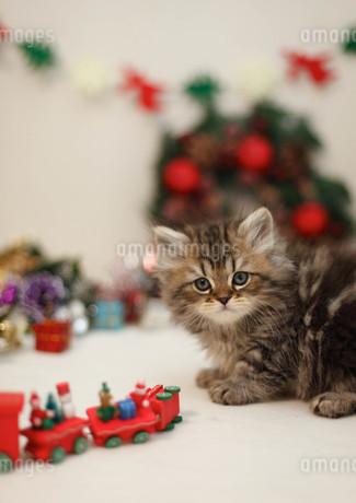 クリスマスと子ねこの写真素材 [FYI02669131]