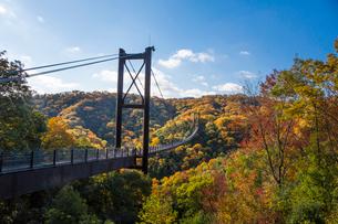 ほしだ園地紅葉と吊橋の写真素材 [FYI02669236]