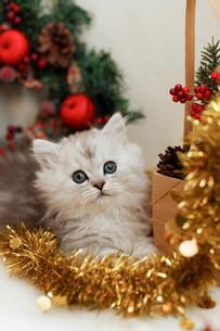 クリスマスと子ねこの写真素材 [FYI02669290]