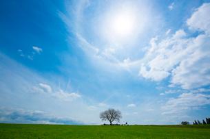 前原の一本桜の写真素材 [FYI02669496]