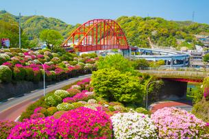 ツツジ咲く音戸大橋の写真素材 [FYI02669621]