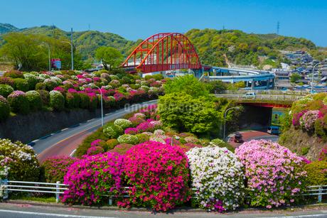 ツツジ咲く音戸大橋の写真素材 [FYI02669643]
