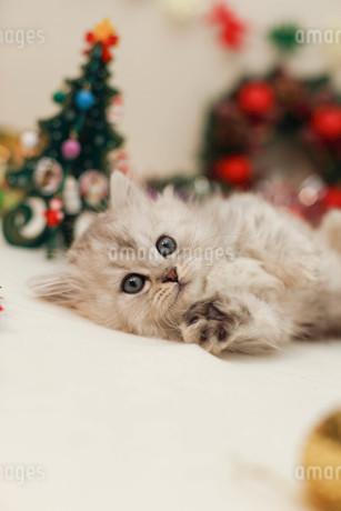クリスマスと子ねこの写真素材 [FYI02669715]