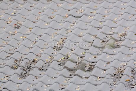 原五社神社社殿の屋根に積った火山灰の写真素材 [FYI02669770]