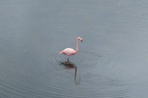 フラミンゴの写真素材 [FYI02669798]